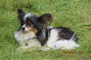 Maisy